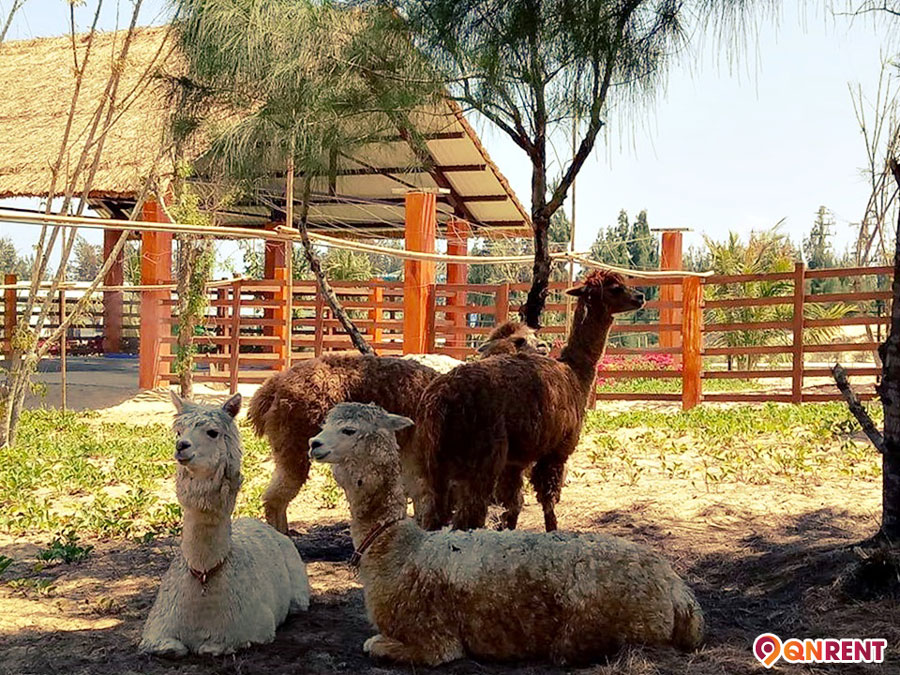 Zoo Safari Park Quy Nhơn