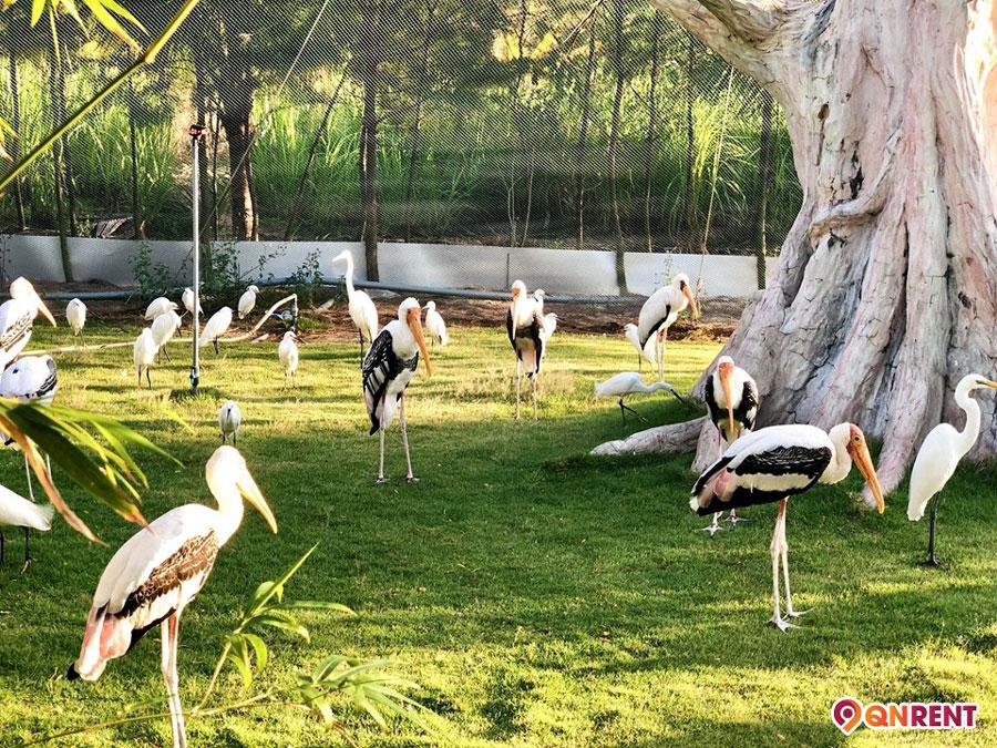 Zoo Safari Quy Nhơn